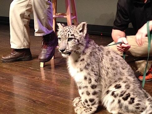 snow leopard 2