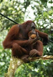 10 Reasons Rainforests Deserve Protection Greenhawks Media