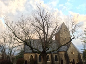 A tree protected by TREE-age outside of Kumler Chapel; Courtesy of Dan Garber
