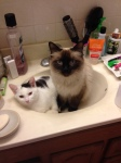 2 cute cats I adopted, Vatrushka and Blinkin