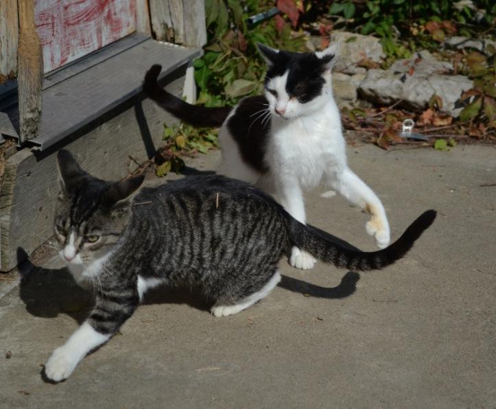 kristis-farm-cats